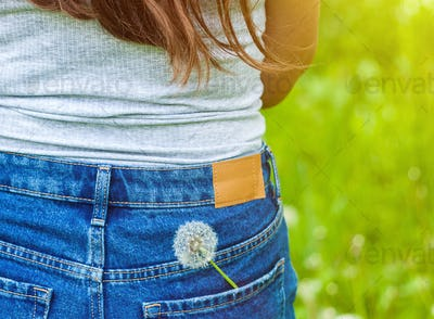 Moody picture of a dandelion flower in a jeans pocket on green background.