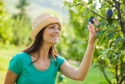Fruit grower
