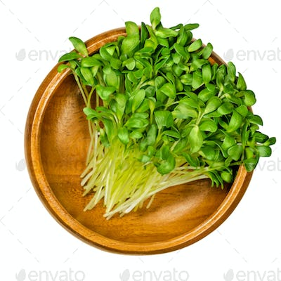 Fenugreek microgreens, ready to eat shoots in a wooden bowl