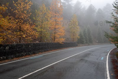 Autumn landscape with empty road and yellow leaves on the trees.
