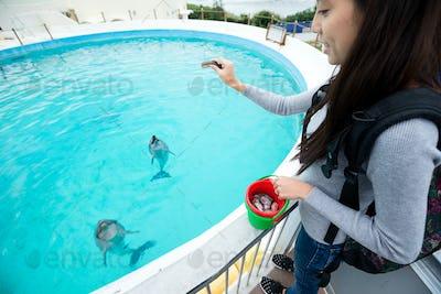 Woman feeding dolphin in aquarium