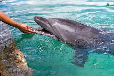 Human touch the Dolphins