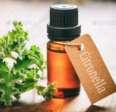 Fresh citronella plant leaves and essential oil on wooden background