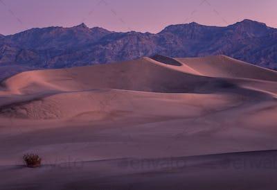 Sunset Sandunes
