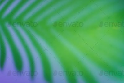 Beautiful fern leaves shadow colored background in artificial light