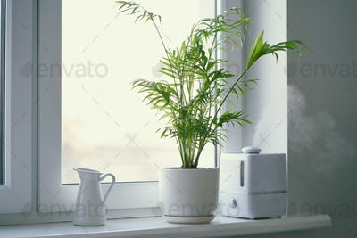 Humidifier and flower Chamaedorea in pot on window. Increase in air humidity in room