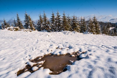 Small puddle of melted snow in the spring sun in the carpathian mountains