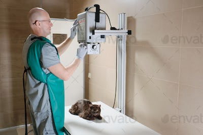 Doctor making an x-ray of cat