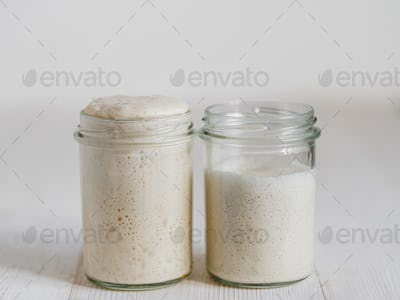 Wheat sourdough starter different hydration levels