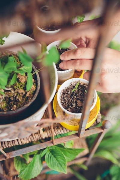 Woman hands planting seedlings in urban garden