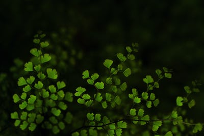 Background of fern leaves on the dark