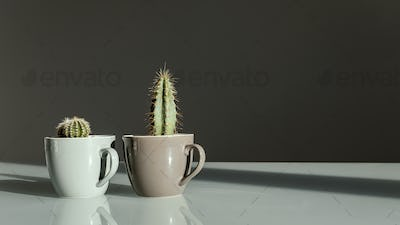 Two small decorative cacti in coffee cups stand on a table on a gray background.