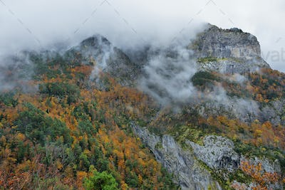 Gorgeous forest in Hecho Valley, Aragonese pyrenees, Huesca province, Spain
