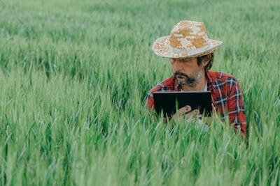 Agronomist using tablet computer in green wheat crop agricultural field