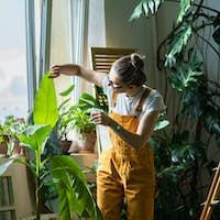 woman gardener spraying banana palm plant, moisturizes leaves during the heating season. Home garden