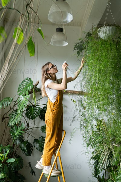 woman gardener spraying lush asparagus plant in flower store stands on stepladder, Greenery at home