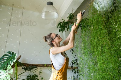 woman florist trims dry branches from lush asparagus fern plant using scissors makes planned pruning