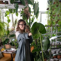 Smiling woman gardener taking photo of large caladium green leaf on smartphone in green house. Hobby