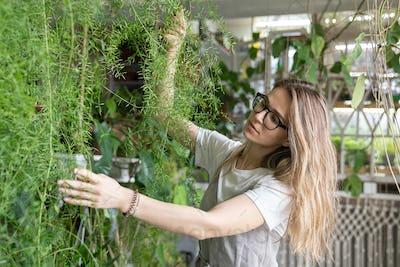 Pretty woman gardener touching lush asparagus fern houseplant. Greenery at home. Indoor cozy garden.