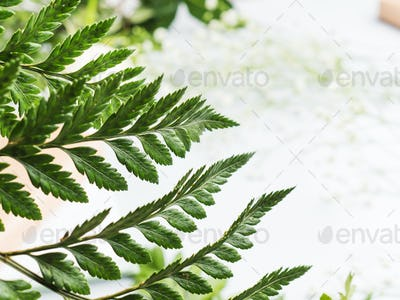 Fern closeup background on gray backdrop. Spring background