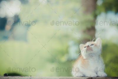 Kitten sitting on the wooden floor looking on the top