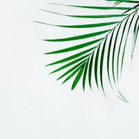 Minimal natural background with green houseplant
