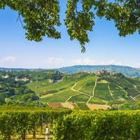 Langhe vineyards, Castiglione Falletto and tree branches. Piedmont, Italy Europe.