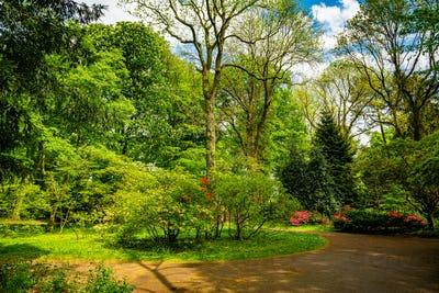 Beautiful Garden with blooming trees during spring time