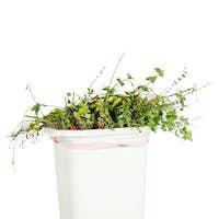 Vegetation in trash can