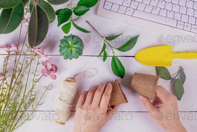 Female hands hold peat pots for planting ficus cuttings. Home gardening, hobby, spring concept.