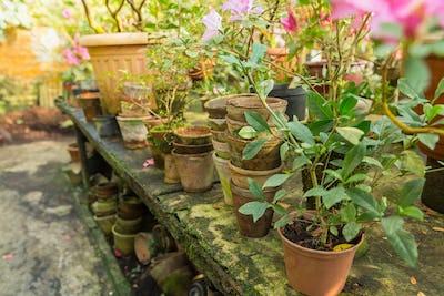 Many empty ceramic pots and flowers