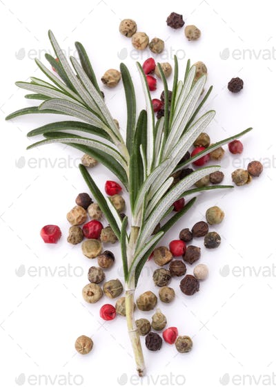 rosemary herb spice leaves and peppercorns isolated on white background cutout