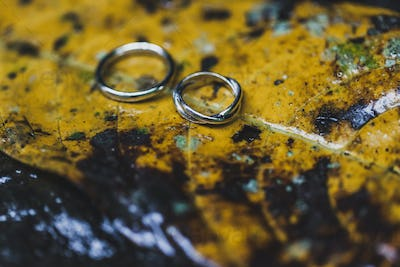 Wedding rings close-up on wet yellow autumn leaf texture