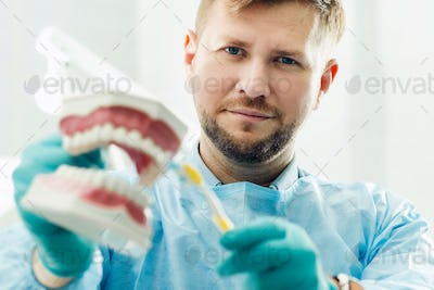 A model of a human jaw with teeth and a toothbrush in the dentist's hand