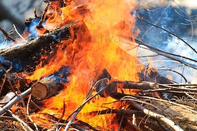 Bonfire burning  at the beach