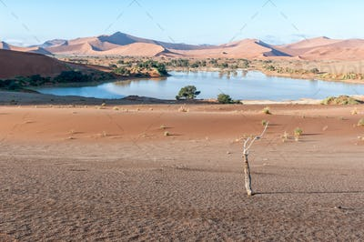 View accross Sossusvlei, filled with water, towards Deadvlei