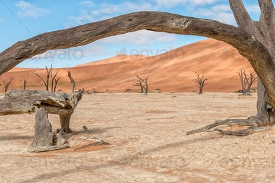 Dead tree stumps, with sand dune backdrop, at Deadvlei
