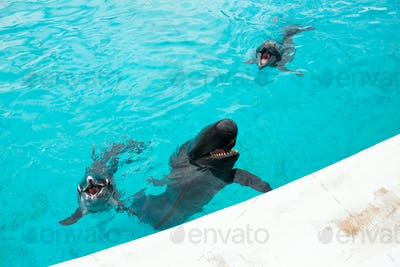 Dolphin and whale shark in Aquarium