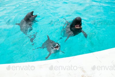 Dolphin and whale shark in water tank