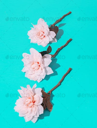White Flowers in blue space.Minimalist scene. Spring,summer, greeting card concept