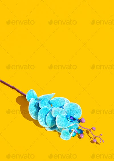 Flowers blue cala in yellow space. Minimal wallpaper. Spring,summer, greeting card concept