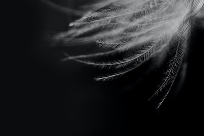 Black and white closeup shot of feather.