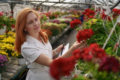 Woman inspecting flowers in greenhouse