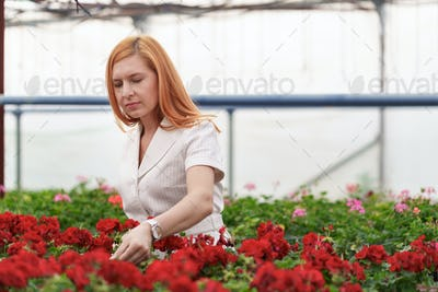 Woman touches flowers with her hand