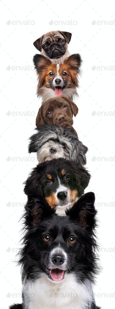 vertical dog banner