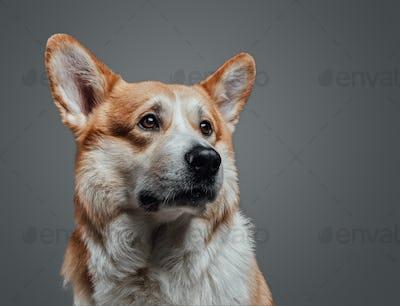 Close up horizontal portrait of hungry dog.