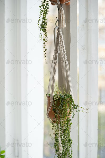 Handmade cotton macrame plant hanger hanging from the window in living room. Hobbies
