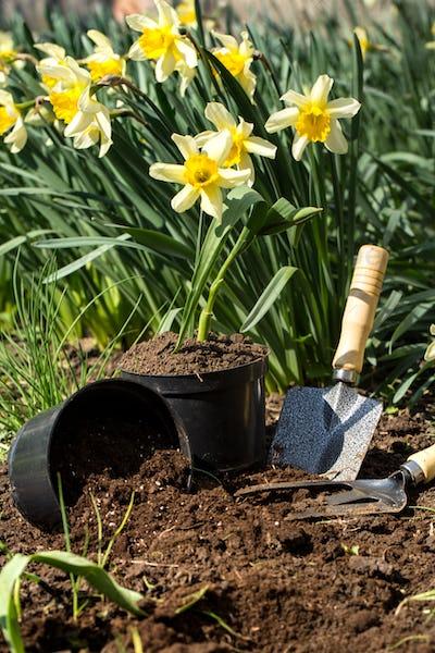 Planting flowers in the garden, garden tools, flowers