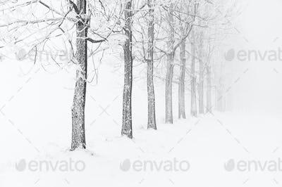 Typical snowy landscape in Ore Mountains, Czech republic.