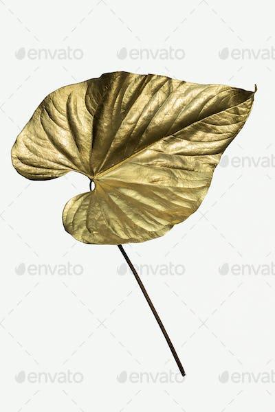 Gold spray paint on an Alocasia leaf